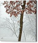 Autumn Leaves In Winter Snow Storm Acrylic Print