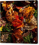 Autumn Leaves On The Moss Acrylic Print