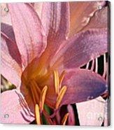 Autumn Lily Acrylic Print