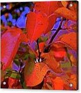 Autumn Magic 1 Acrylic Print