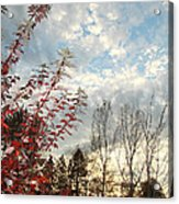 Autumn Maple And Sky Acrylic Print