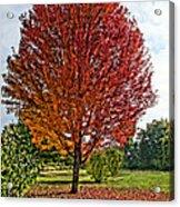 Autumn Maple Emphasized Acrylic Print