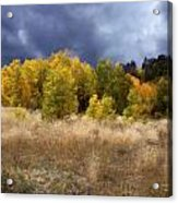 Autumn Meadow Acrylic Print by Carol Cavalaris