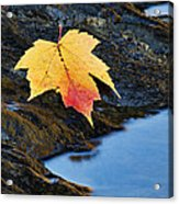 Autumn On The Tellico River - D004558 Acrylic Print