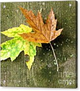 Autumn Pair Acrylic Print
