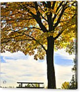 Autumn Park Acrylic Print by Elena Elisseeva