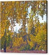 Autumn Picnic Spot Acrylic Print