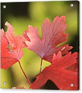 Autumn Red Acrylic Print