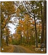 Autumn Road Colors Acrylic Print