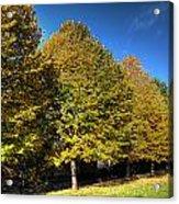 Autumn Row Acrylic Print