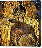 Autumn Rusticana Acrylic Print