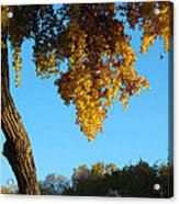 Autumn Shadows_rio Grande Blvd_albuquerque_nm Acrylic Print
