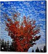 Autumn Sky Drama Acrylic Print