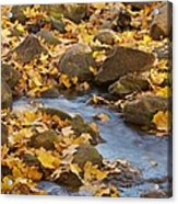Autumn Slipping Away 0437 Acrylic Print
