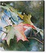 Autumn Sparkle Acrylic Print