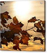 Autumn Splendor Acrylic Print