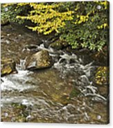 Autumn Stream 6149 Acrylic Print