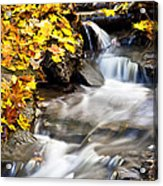 Autumn Stream No 3 Acrylic Print