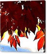 Autumn Sun Glory Acrylic Print