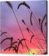 Autumn Sunrise At The Cemetery On Coal Bank Acrylic Print