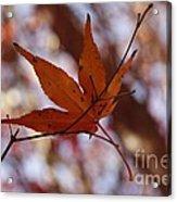 Autumn Swing Acrylic Print