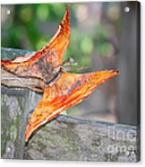 Autumn - The Year's Loveliest Smile Acrylic Print by Christine Till