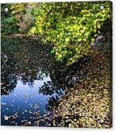 Autumn Tree Colors In Central Park In New York City Acrylic Print