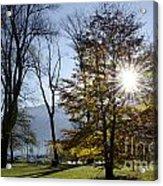 Autumn Tree In Backlight Acrylic Print