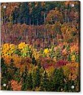 Autumn Trees Panorama Acrylic Print by Matt Dobson