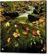Autumn View Shows Fallen Leaves Acrylic Print