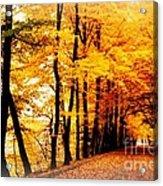 Autumn Walk In Belgium Acrylic Print