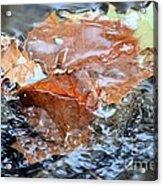 Autumn Waters Acrylic Print