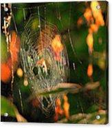 Autumn Web Acrylic Print