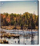 Autumn Wetland Acrylic Print