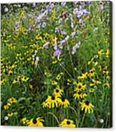 Autumn Wildflowers - D007762 Acrylic Print by Daniel Dempster