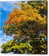 Autumnal Fruition Acrylic Print