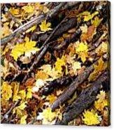Autumnal Melody Acrylic Print