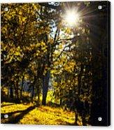 Autumnal Morning Acrylic Print