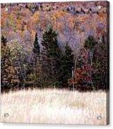 Autumnfield 2 Acrylic Print