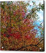 Autumns Beauty Acrylic Print