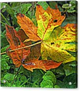 Autumn's Gift Acrylic Print
