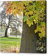 Autumn's Gold Acrylic Print