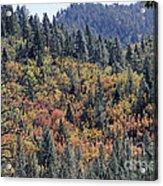 Autumns Palette Acrylic Print
