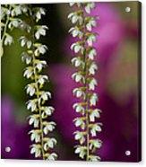 Ava's Fragile Flower Acrylic Print
