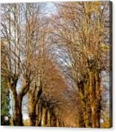 Avenue Of Trees Acrylic Print
