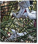 Aviary Acrylic Print