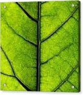 Avocado Leaf 2 Acrylic Print