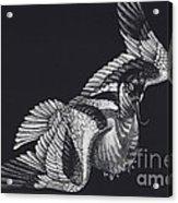 Avocet Acrylic Print