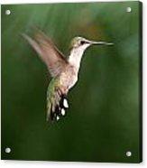 Awesome Hummingbird Acrylic Print