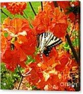 Azalea And Butterfly 1 Acrylic Print